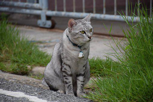 Cat, Animals, Pets, Eye, Tree, Street, Cute, Beautiful