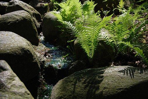 Fern, Stream, The Stones, Nature, Rocks, Brook