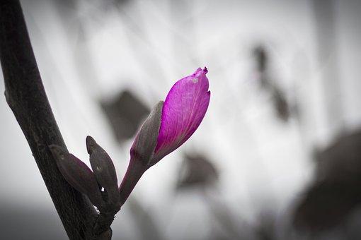 Flower, Nature, Garden, Macro, Violet, Flowers, Nice