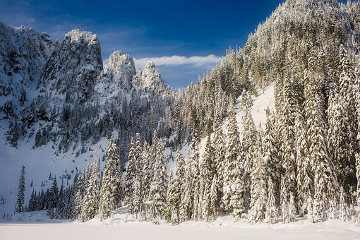 Wyoming, Landscape, Forest, Trees, Woods, Snow, Winter