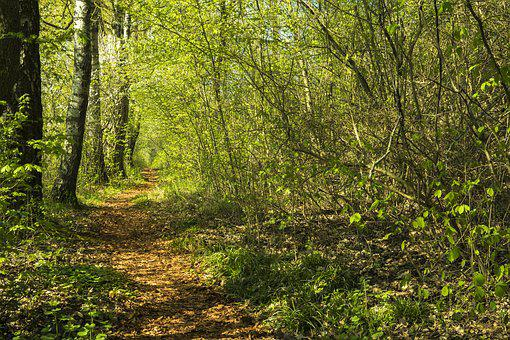 Forest, Away, Trail, Nature, Forest Path, Hiking, Trees