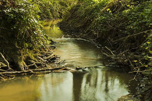 Bach, Water, Long Exposure, Nature, Forest, Flow