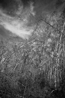 Landscape, Meadowlands, Trees, Birch, Bare Branches