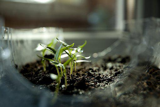 Sprout, Earth Day, Ecology, Green, Nature, Plant