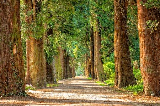 Avenue, Trees, Away, Walk, Green, Riesen, Nature, Park