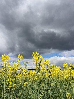 Rape, Rape Field, Yellow, Clouds, Field, Spring