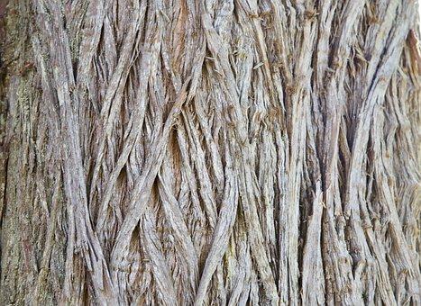 Texture, Bark, Wood, Pattern, Brown, Rough, Trunk