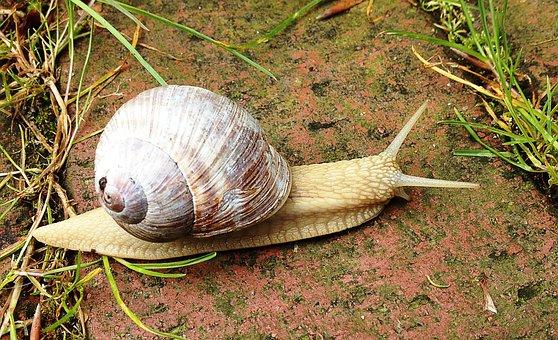 Snail, Nature, Crawl