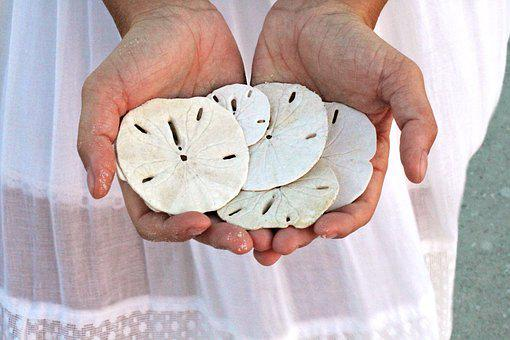 Sand Dollars, Beach, Ocean, Sea, Seaside, Shells, Sand