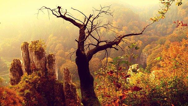 Paternity National Park, Autumn, Landscape