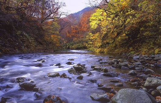 River, Forest, Autumnal Leaves, Late Autumn