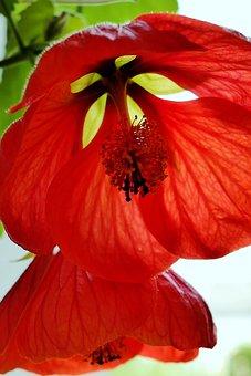 Blossom, Bloom, Stamp, Red, Close, Spring, Leaves