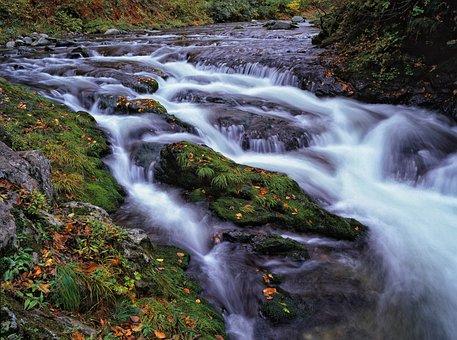 Clear Stream, Moss, Fallen Leaves, Rock, Autumn