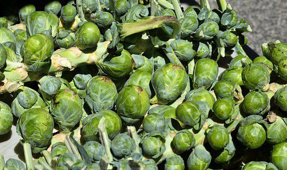 Brussel Sprouts, Vegetable, Food, Green, Healthy, Fresh