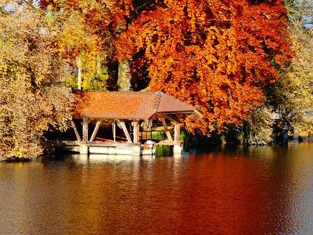Web, Lake, Mauensee, Autumn, Bank