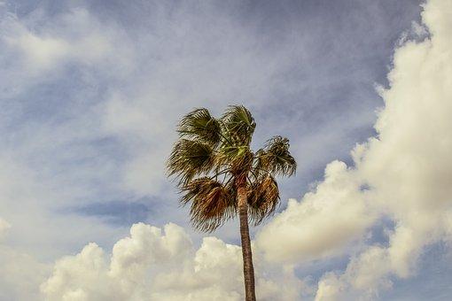 Palm Tree, Sky, Clouds, Palm, Tropical, Paradise