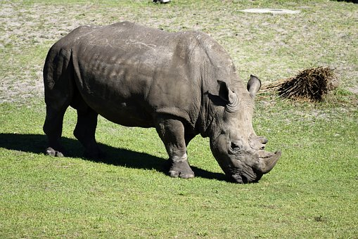 Rhino, Wildlife, Animal Reserve, Animal, Nature, Mammal