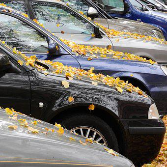 Yellow Leaves, Leaves On The Hood