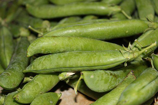 Green Peas, Pea, Cultivation, Huerta, Harvest, Green