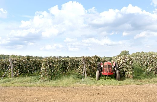 Red, Tractor, Farm, Grape Field, Sky, Clouds