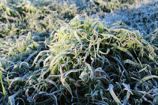 Grass, Frost, Green, Ice, Cold, Surface, Tomorrow