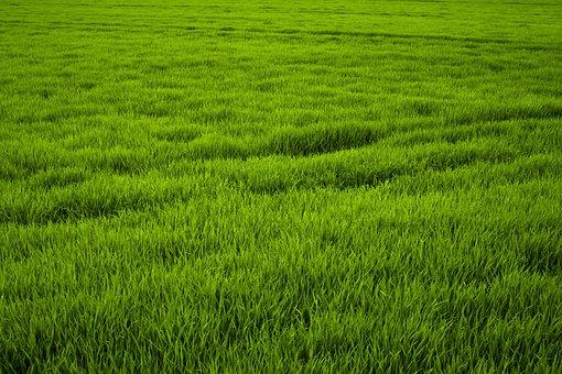 Grass, Green, Meadow, Juicy, Frisch, Nature, Grasses