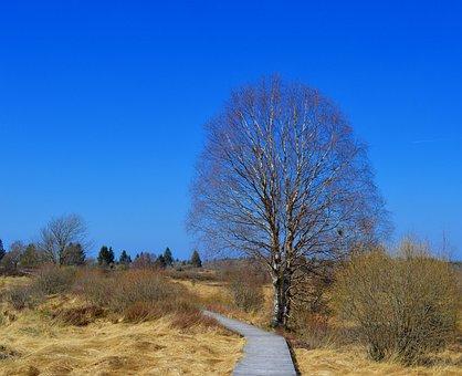 Moor, Peat Bog, Venn, High Venn, Nature Conservation