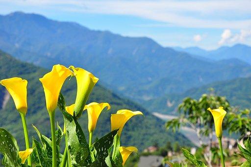 Flower, Mountain, Sky, Nature, Landscape, Green, Travel
