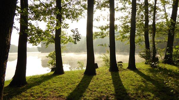 Light, Shadow, Shadow Play, Forest, Leaves, Sun, Fog