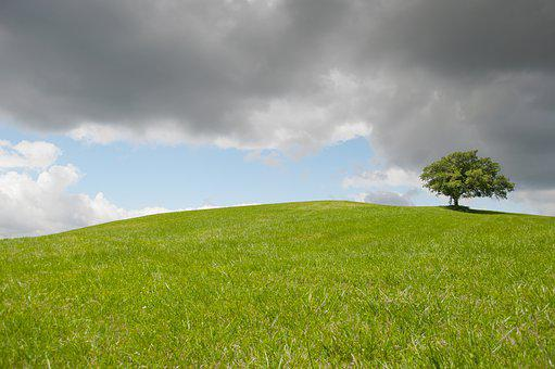 Hill, Lonely, Tree, Green, Meadow, Outdoor, Horizon