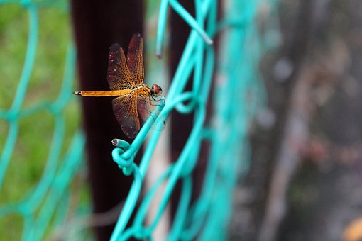 Macro, Nature, Insect, Animal, Close, Dragonfly