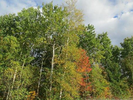 Trees, Nature, Autumn, Natural, Foliage
