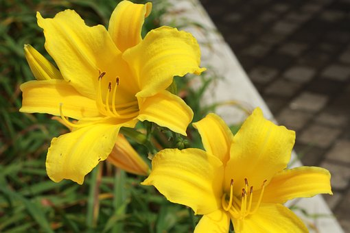 Flower, Plant, Yellow Flower, Nature, Flowers, Garden