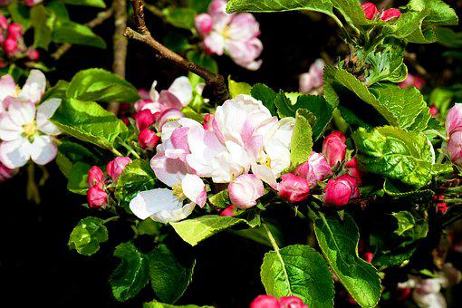 Flowers, Plant, Nature, Spring, Garden, Summer, Floral
