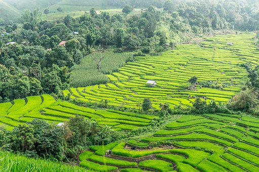Rice Terraces, Thailand, Chiang Mai, Rice, Field