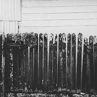 Rusty, Fence, Woods, Black And White, Square, Abandoned