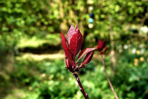 Plant, Leaf, Nature, Green, Summer, Garden, Branch