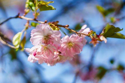 Flowers, Summer, Warm, Nature, Summer Flower, Garden