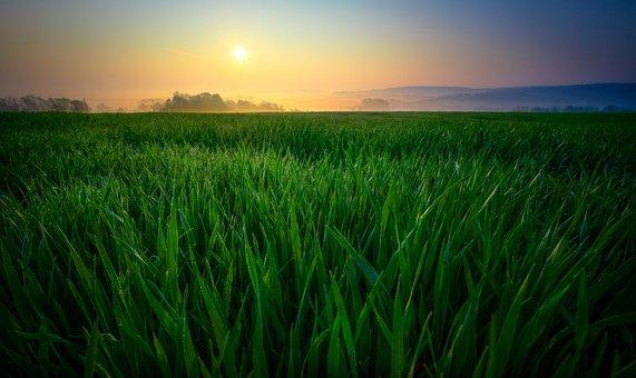 Sunrise, Field, Nature, Fog, Landscape, Sun, Morning