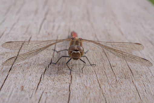 Dragonfly, Insect, Green, Nature, Table, Animal