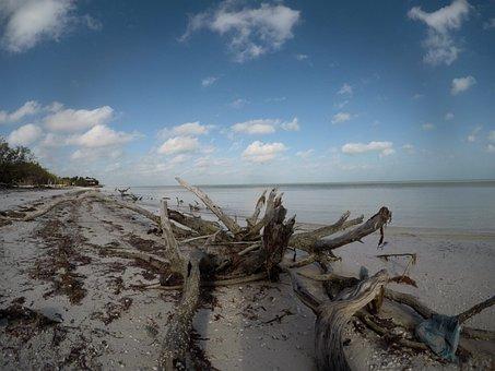 Driftwood, Seaside, Beach, Wood, Nature, Weathered, Old