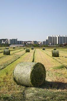 Farming, Republic Of Korea, Farm Water