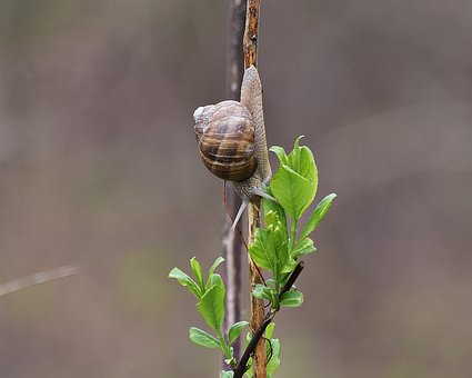Snail, Molluscum, Scallop, Antennae, Nature, Green