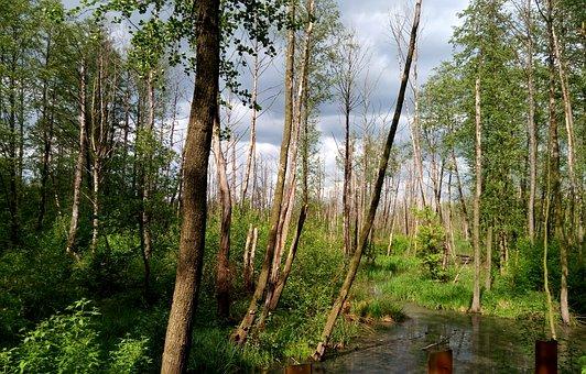 Tree, Park, River, Brook, Naturam, Summer, Spring