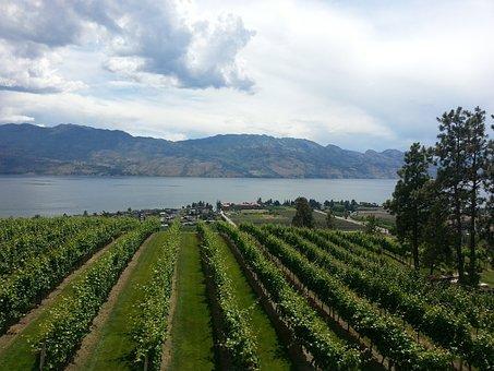 Wine, Vineyard, Nature