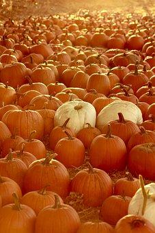 Fall, Halloween, October, Autumn, Season, Pumpkin
