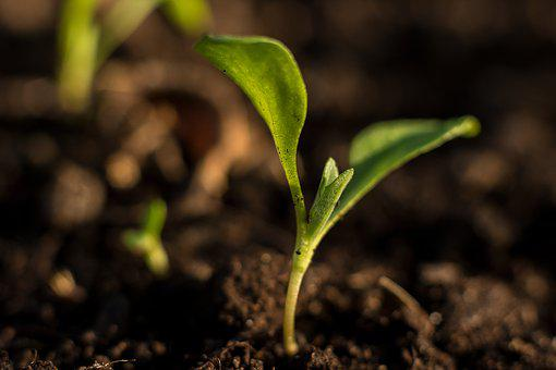 Plant, Small, Water, Small Plant, Green, Nature, Garden