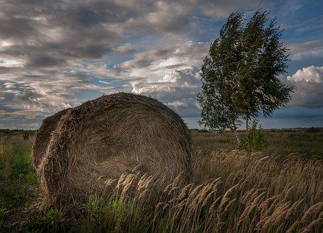 Landscape, Rick, Skirda, Hay, Summer, Wind, Spikes