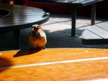 The Sparrow, Summer, Dining Table, Bird, Closeup, Sunny