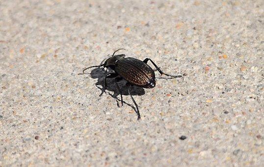 Beetle, Closeup, Insect, Zoom, Garden, Macro, Nature